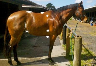 Equine Therapy Eco Balancer Toxins Heavy Metals